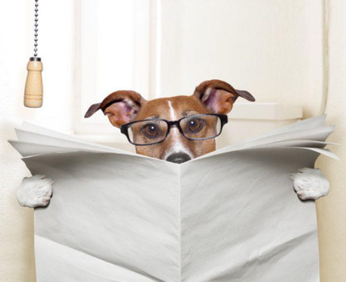 26623309 - dog sitting on toilet and reading magazine